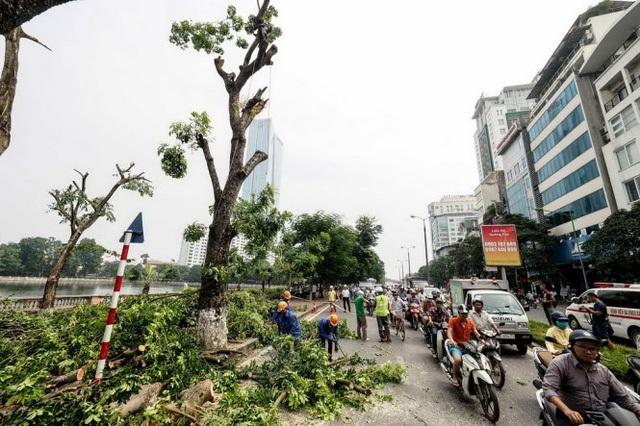 Hàng cây xanh trên phố Kim Mã mất đi sẽ khiến việc di chuyển của người dân gặp rất nhiều vất vả, đặc biệt trong những ngày hè