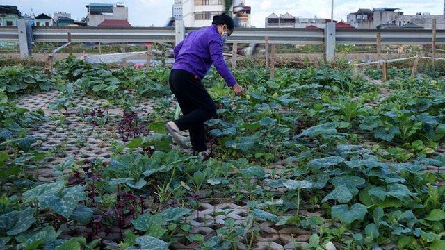 Vườn rau nhà cô Hạnh...