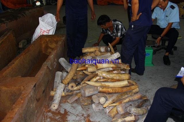 Mỗi khối gỗ chứa trên dưới 200 kg ngà voi