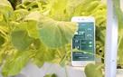 Trước vấn nạn thực phẩm bẩn bủa vây, startup của một sinh viên Bách Khoa sẽ giúp người Việt trồng rau sạch dễ dàng mà không cần đất hay mặt trời, chỉ cần 1 chiếc smartphone