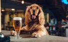 Công ty này cho phép nhân viên nghỉ hẳn 1 tuần được hưởng lương chỉ để chăm sóc thú cưng