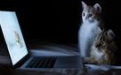 Các nhà nghiên cứu tại OpenAI tìm ra lỗi của AI: Trí tuệ nhân tạo có thể bị đánh bại bởi... một con mèo