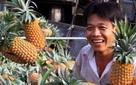 Rau củ quả tăng giá mạnh, người nông dân có lãi và yên tâm sản xuất