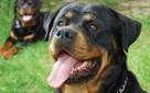 """Khoa học chứng minh: Chính cách dạy dỗ của con người đang làm """"hư"""" loài chó"""