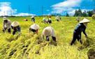Xây dựng dự thảo Nghị định mới khuyến khích doanh nghiệp đầu tư nông nghiệp, nông thôn
