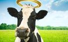 Một startup Ấn Độ ăn nên làm ra nhờ bán xà phòng và kem đánh răng từ phân và nước tiểu bò