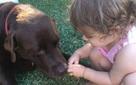 Dù có yêu chú chó của mình đến mấy bạn cũng đừng cho nó ăn socola và đây là lý do