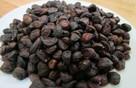 Săn hạt dổi rừng 4 triệu/kg: Nhà giàu dậy hương ngày Tết
