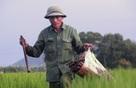 Nghề bắt lươn đồng ở xứ Nghệ
