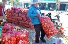 Nhà vườn Đà Lạt trúng lớn hành, khoai tây