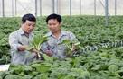 100 đồng vốn FDI vào Việt Nam mới có 1 đồng vào nông nghiệp