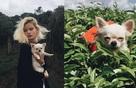 Cùng với cô chủ, chú chó dễ thương này đã có hơn 10 chuyến đi đáng nhớ trong đời!