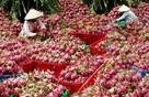 Nhiều doanh nghiệp Việt bị lừa đảo khi giao dịch xuyên biên giới