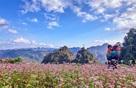 Hà Nội: Sẽ có lễ hội hoa tam giác mạch ngay tại khu vực phố đi bộ Hồ Gươm