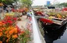 Bến Bình Đông rực rỡ hoa kiểng trên bến dưới thuyền