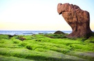 Cắm trại trên bờ biển mùa rêu nhuộm xanh biển Cổ Thạch