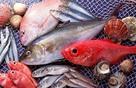 Hai loại cá có chứa nhiều thủy ngân bạn cần biết