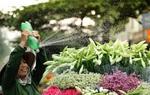 """Tháng 4 là lời hẹn ước: """"Hà Nội ơi, mình gặp nhau ngày hoa loa kèn nở """""""