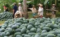 Xuất khẩu rau quả: Thị trường Châu Âu, Bắc Mỹ cộng lại không bằng số lẻ của Trung Quốc