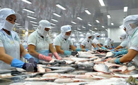"""Xuất khẩu cá tra năm 2016: """"Đừng quan tâm nhiều vào thị trường Mỹ"""""""