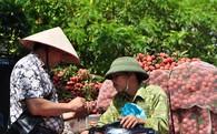 Vải thiều quả nhỏ, vỏ thâm bán trên ôtô ở Hà Nội