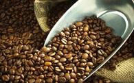 Cạnh tranh kém, Việt Nam đứng trước nguy cơ mất ngôi Á quân xuất khẩu cà phê