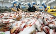 """Cá tra Việt Nam chịu """"áp lực"""" từ cá rô phi Trung Quốc"""