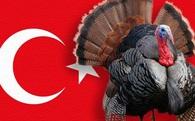 """Thổ Nhĩ Kỳ, Gà tây và câu chuyện xung quanh cái tên Turkey """"nhạy cảm"""""""