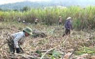 Làm sao để thoát khỏi nền nông nghiệp 'tình thương'? (P.1)