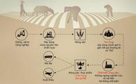 Chuỗi giá trị nông nghiệp thông minh của TSC có những gì?