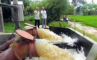 Lấy nước sông Tiền cứu lúa