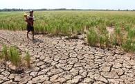 """Indonesia, Philippines có thể phải """"chịu đói"""" nếu Việt Nam mất mùa do hạn hán"""