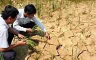 Hạn hán ở Nam Trung bộ sẽ khốc liệt hơn