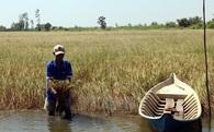 Toàn bộ Đồng bằng sông Cửu Long đã bị xâm nhập mặn