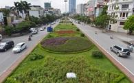 Dừng chi tiền chăm sóc, cỏ mọc như rừng giữa Hà Nội