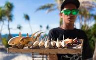 Nhờ có cá mập, đảo ngọc du lịch tại Philippines mới hồi sinh thần kì đến vậy
