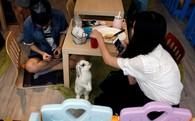 Quán cà phê thỏ ở Hong Kong