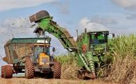 Vì El Nino, thế giới sẽ gặp tình trạng thiếu hụt... đường