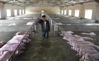 Nông dân khóc nức nở khi thấy đàn lợn chìm trong biển nước