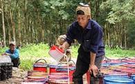 Nếu Hoàng Anh Gia Lai bán cao su tại Lào…