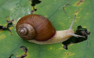 Chiến lược đánh dấu đường đi của loài ốc sên: Bài học cuộc sống đầy ý nghĩa không phải ai cũng biết