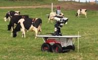 Người Nhật tìm đến sữa để ngày càng cao lên, nhưng chẳng ai muốn nuôi bò, họ đã giải quyết bài toán này thế nào?