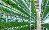 """Hơn 500 dự án ngoại, đầu tư nông nghiệp sạch đang là """"mốt"""""""