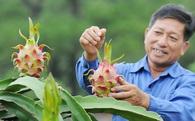 Một liên minh muốn trở thành bà mai, bà đỡ cho nông dân, sẽ mở 200 siêu thị rau quả an toàn ở HN và TP.HCM