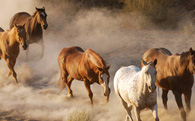 Chuyện ngựa hoang tìm cách diệt lợn rừng: Bất cứ ai cũng nên đọc để tự răn mình!