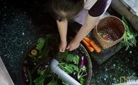 Ở Nhật, người ta có thể rửa bát, rửa rau ngay ở hồ cá trong nhà, bí quyết là nhờ…
