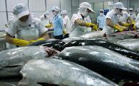 Cá ngừ xuất khẩu chuyển hướng sang thị trường mới nổi