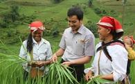 Bắt tay người nông dân làm mô hình cánh đồng mẫu lớn, công ty này đã nâng giá trị hạt gạo lên cả chục lần, xuất đi 36 nước