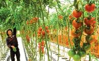Ngành rau quả chế biến nhìn từ Tây Ninh