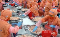 Doanh nghiệp thiệt hại lớn bởi lệnh cấm nhập khẩu tôm của Australia